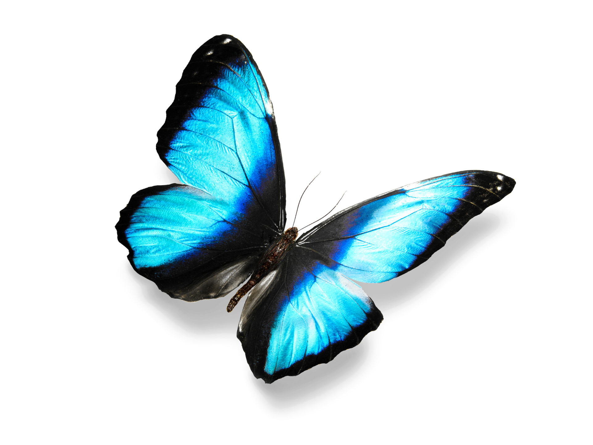 Marketing Transformation - Blue Focus Marketing